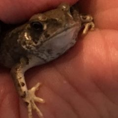 "We Shall Call Him ""Toadsly""!"